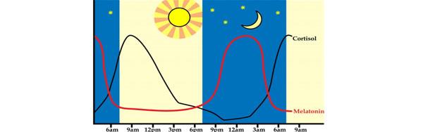 نقش خواب در مطالعه