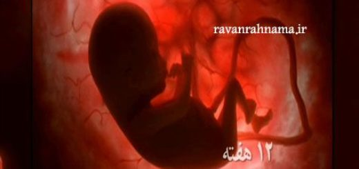 دانلود مستند رشد جنین
