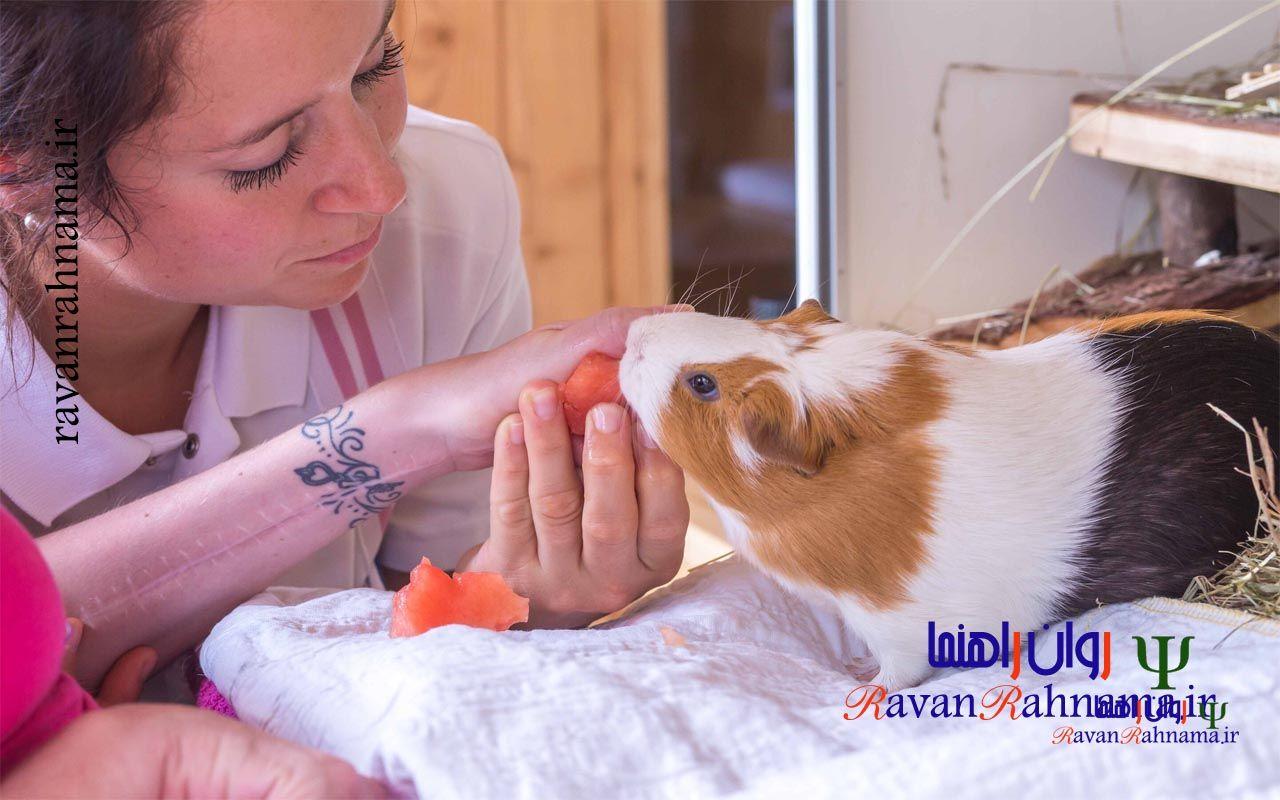 درمان بوسیله حیوانات خانگی